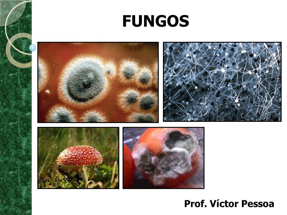 FUNGOS Prof. Víctor Pessoa