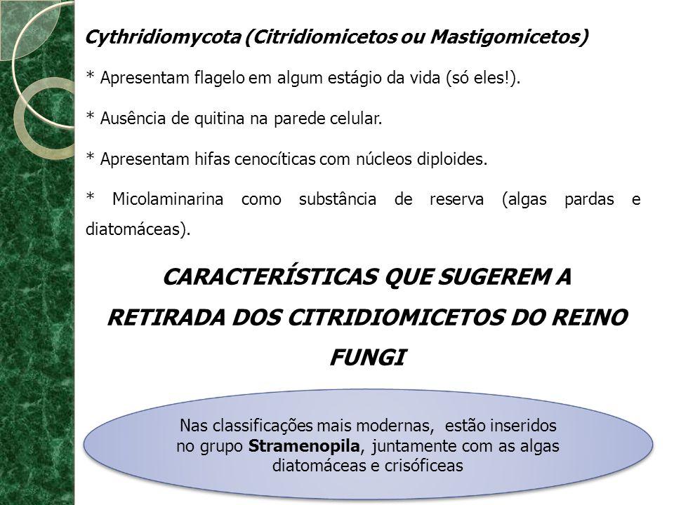 Cythridiomycota (Citridiomicetos ou Mastigomicetos) * Apresentam flagelo em algum estágio da vida (só eles!). * Ausência de quitina na parede celular.