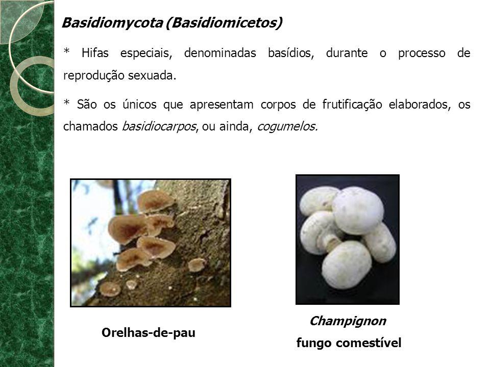 Basidiomycota (Basidiomicetos) * Hifas especiais, denominadas basídios, durante o processo de reprodução sexuada. * São os únicos que apresentam corpo