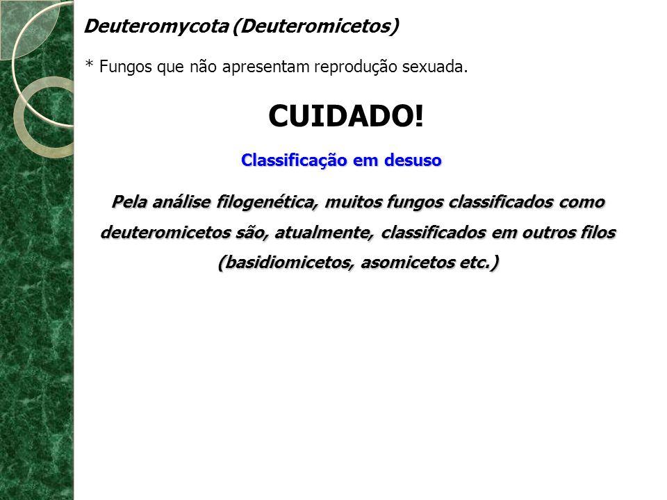 Deuteromycota (Deuteromicetos) * Fungos que não apresentam reprodução sexuada. CUIDADO! Classificação em desuso Pela análise filogenética, muitos fung