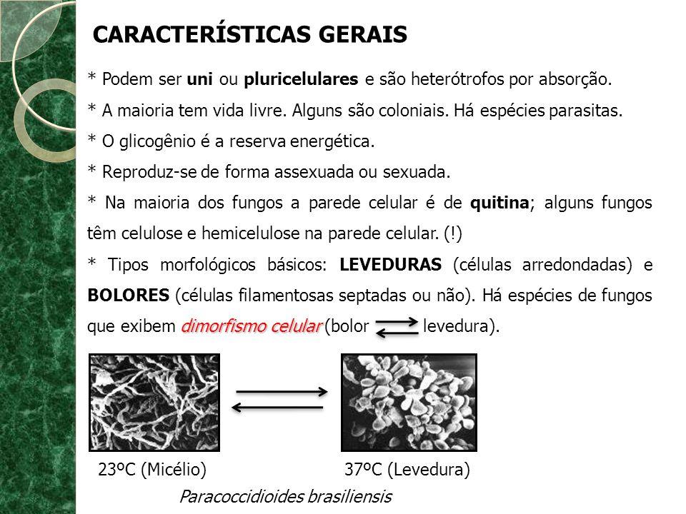 * Podem ser uni ou pluricelulares e são heterótrofos por absorção. * A maioria tem vida livre. Alguns são coloniais. Há espécies parasitas. * O glicog