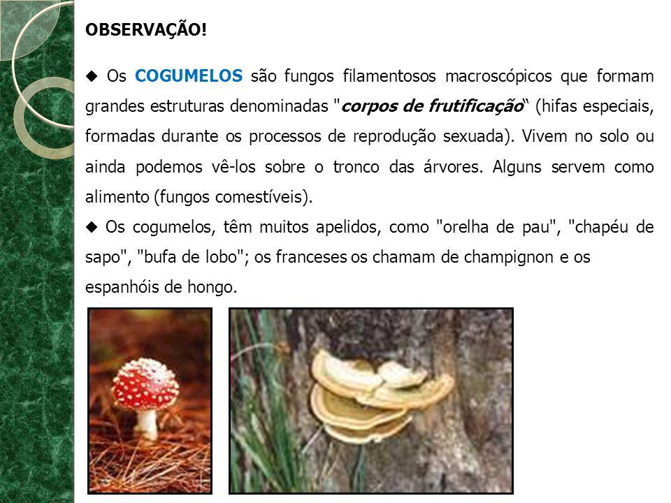 OBSERVAÇÃO! Os COGUMELOS são fungos filamentosos macroscópicos que formam grandes estruturas denominadas