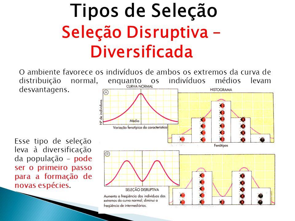 Tipos de Seleção Seleção Disruptiva – Diversificada O ambiente favorece os indivíduos de ambos os extremos da curva de distribuição normal, enquanto os indivíduos médios levam desvantagens.