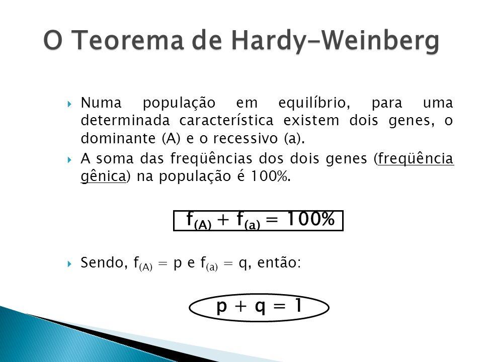 O Teorema de Hardy-Weinberg Numa população em equilíbrio, para uma determinada característica existem dois genes, o dominante (A) e o recessivo (a).