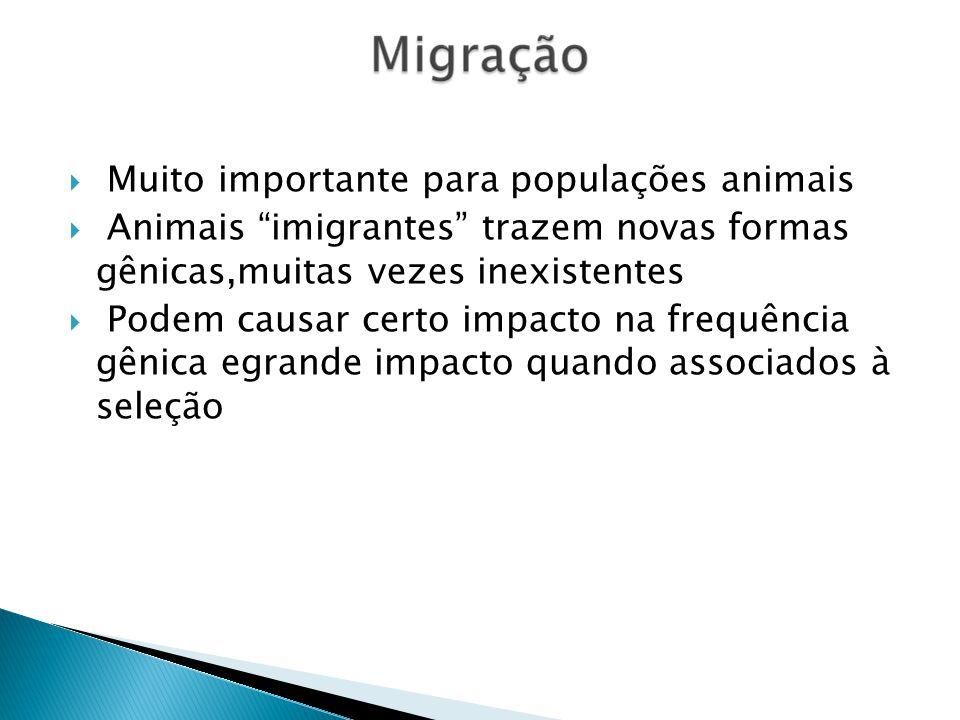 Muito importante para populações animais Animais imigrantes trazem novas formas gênicas,muitas vezes inexistentes Podem causar certo impacto na frequência gênica egrande impacto quando associados à seleção