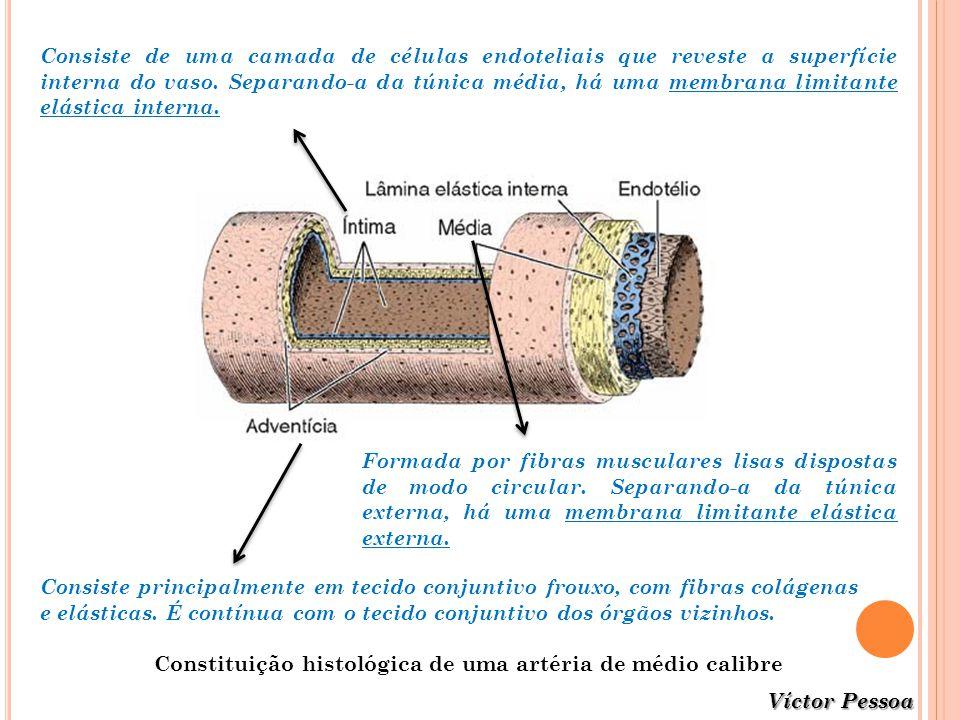 Víctor Pessoa Constituição histológica de uma artéria de médio calibre Consiste principalmente em tecido conjuntivo frouxo, com fibras colágenas e elá