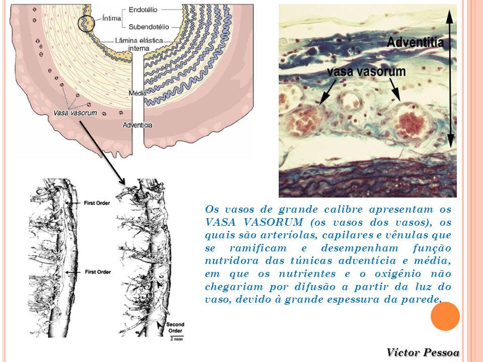 Víctor Pessoa Os vasos de grande calibre apresentam os VASA VASORUM (os vasos dos vasos), os quais são arteríolas, capilares e vênulas que se ramifica