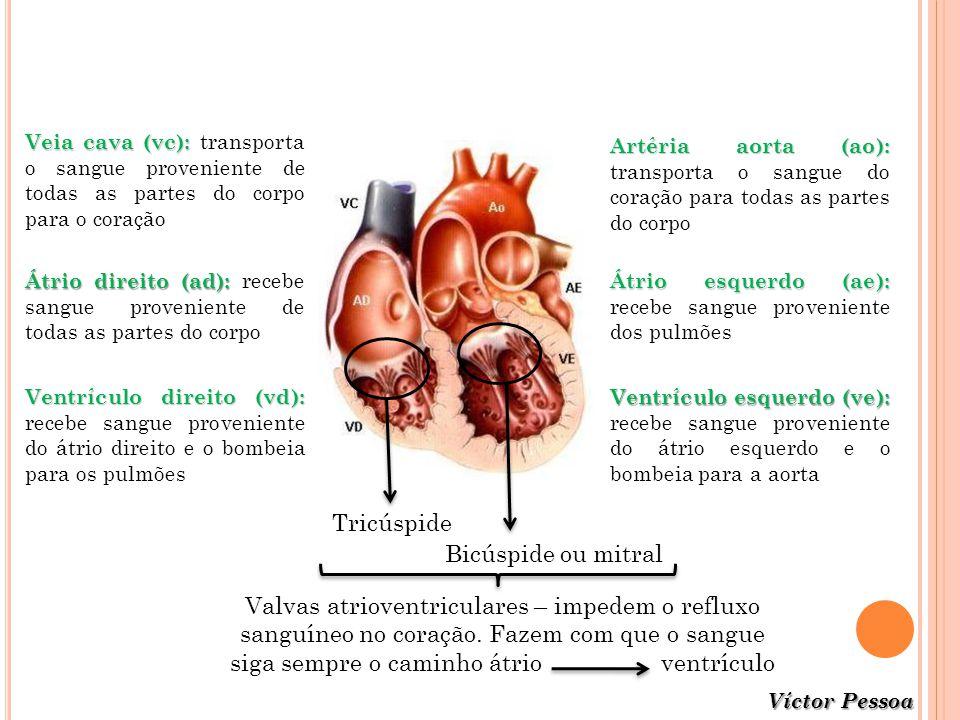 Víctor Pessoa Veia cava(vc): Veia cava (vc): transporta o sangue proveniente de todas as partes do corpo para o coração Átrio direito(ad): Átrio direi