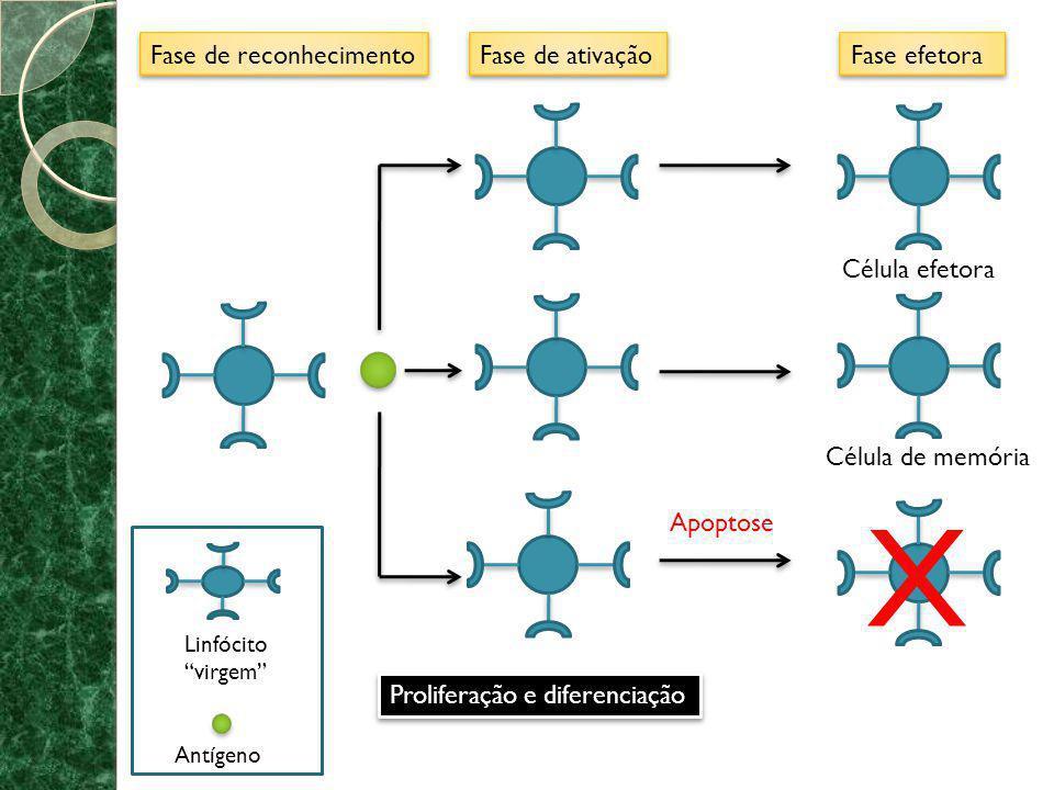 * Imunidade ativa: o indivíduo imunizado passa a ter um papel ativo no desenvolvimento da resposta imune (e.g.