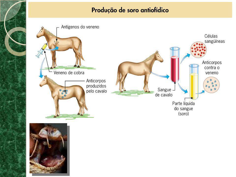 ANTÍGENOS E ANTICORPOS (IMUNOGLOBULINAS) * ANTÍGENOS são agentes estranhos que têm a capacidade de estimular a ação dos linfócitos e a produção de anticorpos.