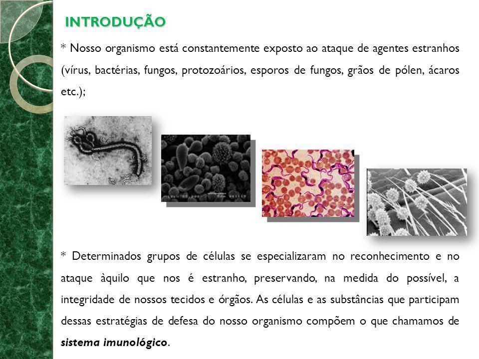 CÉLULAS, TECIDOS E ÓRGÃOS DO SISTEMA IMUNOLÓGICO * As células que constituem o sistema imunológico originam-se de células precursoras localizadas na medula óssea, sendo os LEUCÓCITOS as principais.
