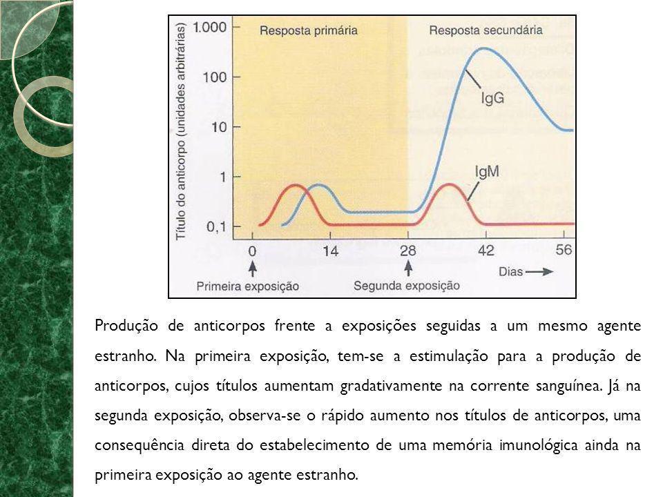Produção de anticorpos frente a exposições seguidas a um mesmo agente estranho. Na primeira exposição, tem-se a estimulação para a produção de anticor