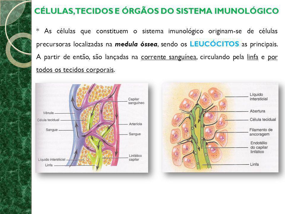 CÉLULAS, TECIDOS E ÓRGÃOS DO SISTEMA IMUNOLÓGICO * As células que constituem o sistema imunológico originam-se de células precursoras localizadas na m