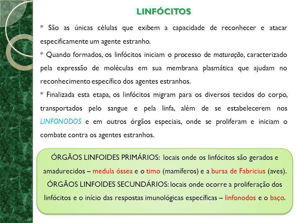 LINFÓCITOS * São as únicas células que exibem a capacidade de reconhecer e atacar especificamente um agente estranho. * Quando formados, os linfócitos