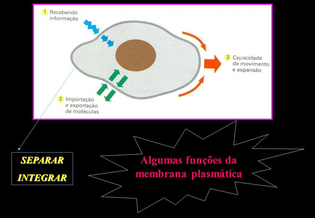 Algumas funções da membrana plasmática SEPARARINTEGRAR