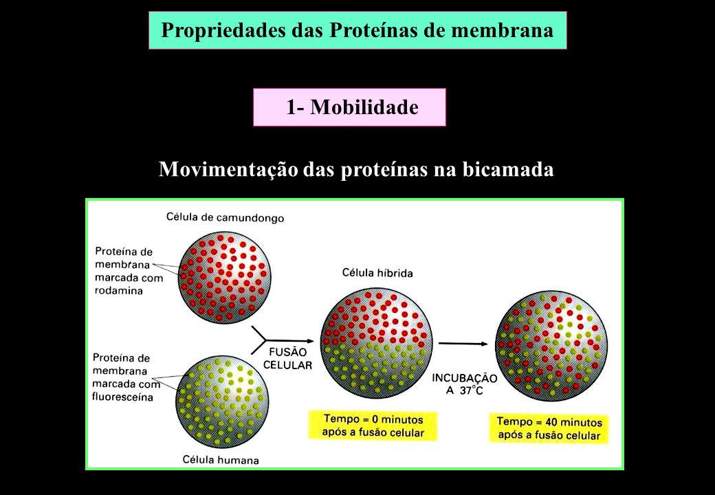 Movimentação das proteínas na bicamada Propriedades das Proteínas de membrana 1- Mobilidade