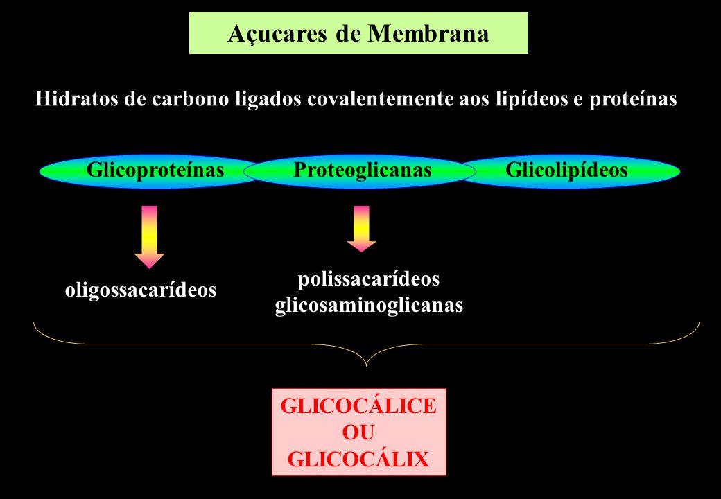 Hidratos de carbono ligados covalentemente aos lipídeos e proteínas GlicoproteínasGlicolipídeosProteoglicanas oligossacarídeos polissacarídeos glicosa