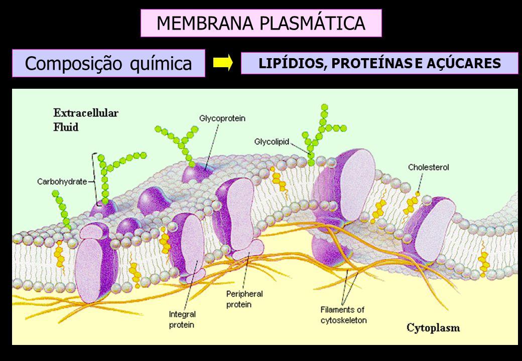 Modelo de Singer e Nicolson (1972) Modelo do Mosaico Fluido Proteínas embebidas na bicamada lipídica; Estrutura molecular da membrana plasmática