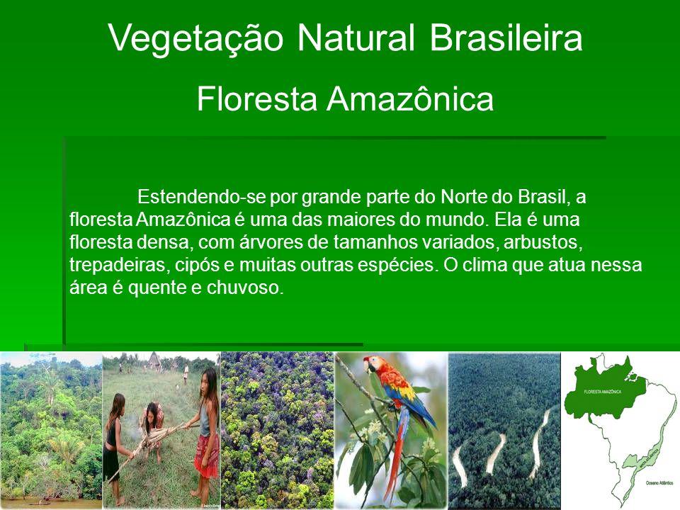 Vegetação Natural Brasileira Floresta Amazônica Estendendo-se por grande parte do Norte do Brasil, a floresta Amazônica é uma das maiores do mundo.