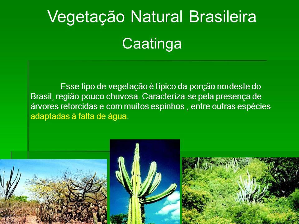 Vegetação Natural Brasileira Caatinga Esse tipo de vegetação é típico da porção nordeste do Brasil, região pouco chuvosa.