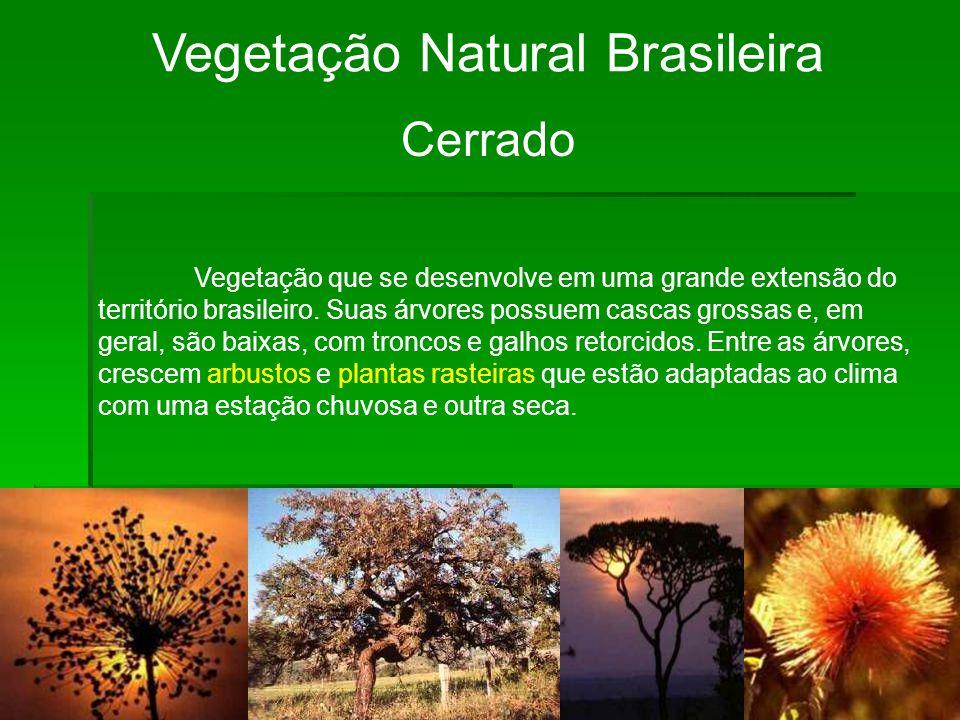 Vegetação Natural Brasileira Cerrado Vegetação que se desenvolve em uma grande extensão do território brasileiro. Suas árvores possuem cascas grossas