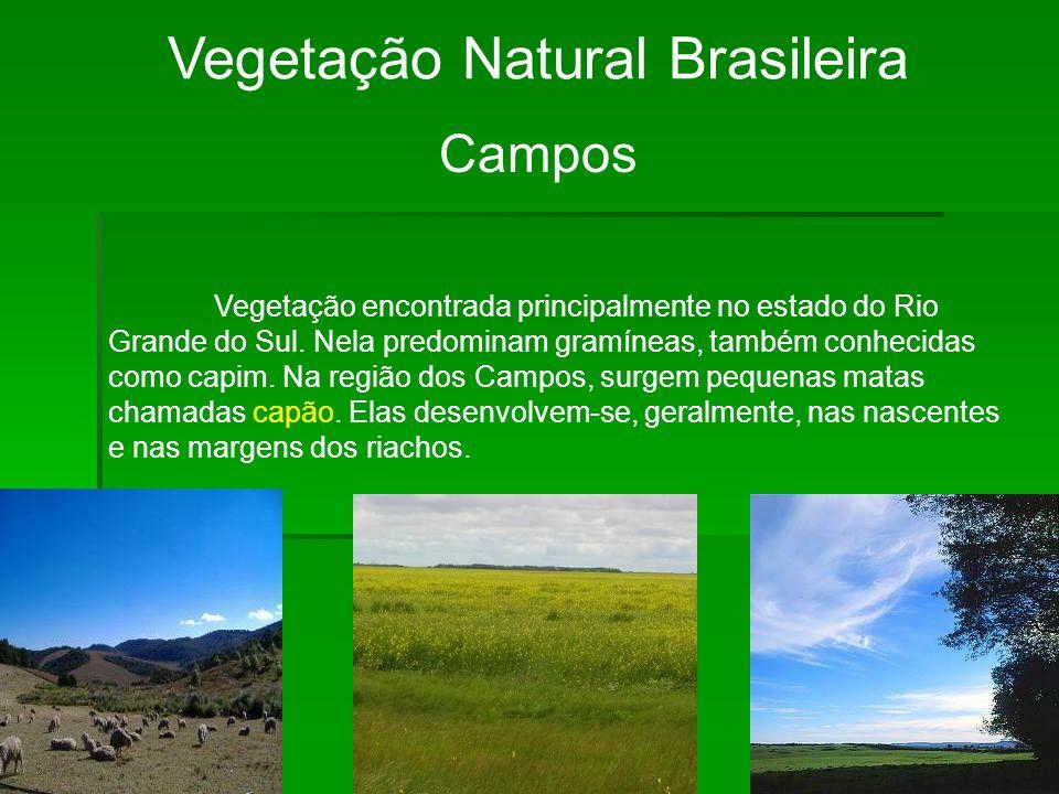 Vegetação Natural Brasileira Campos Vegetação encontrada principalmente no estado do Rio Grande do Sul. Nela predominam gramíneas, também conhecidas c