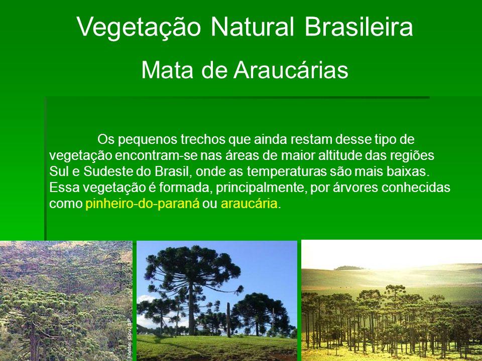 Vegetação Natural Brasileira Mata de Araucárias Os pequenos trechos que ainda restam desse tipo de vegetação encontram-se nas áreas de maior altitude