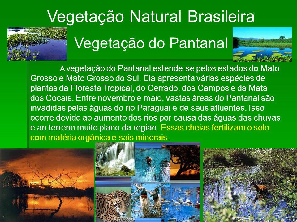Vegetação Natural Brasileira Vegetação do Pantanal A v egetação do Pantanal estende-se pelos estados do Mato Grosso e Mato Grosso do Sul. Ela apresent