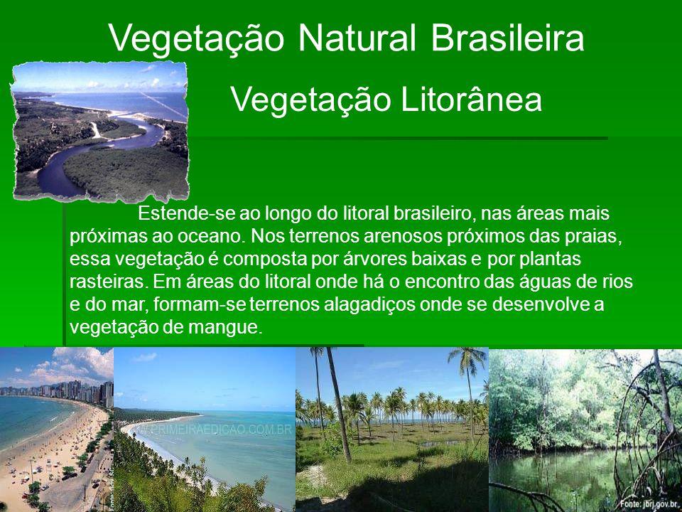 Vegetação Natural Brasileira Vegetação Litorânea Estende-se ao longo do litoral brasileiro, nas áreas mais próximas ao oceano. Nos terrenos arenosos p
