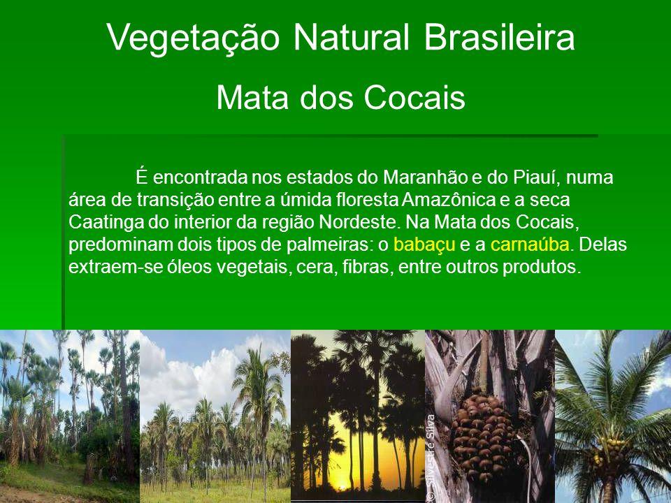 Vegetação Natural Brasileira Mata dos Cocais É encontrada nos estados do Maranhão e do Piauí, numa área de transição entre a úmida floresta Amazônica