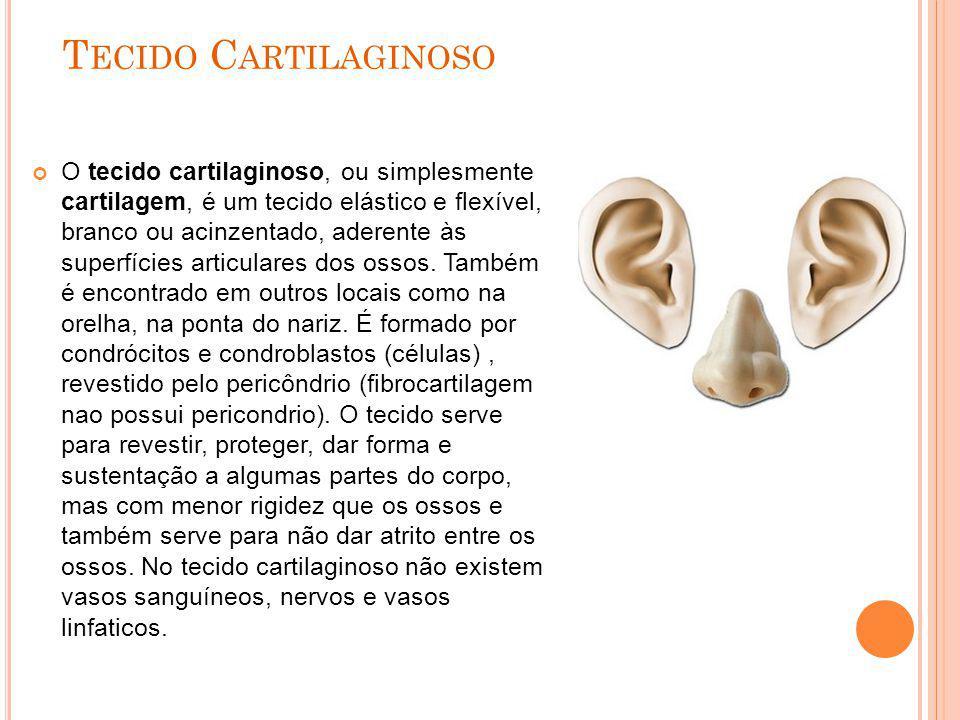 T ECIDO C ARTILAGINOSO O tecido cartilaginoso, ou simplesmente cartilagem, é um tecido elástico e flexível, branco ou acinzentado, aderente às superfí