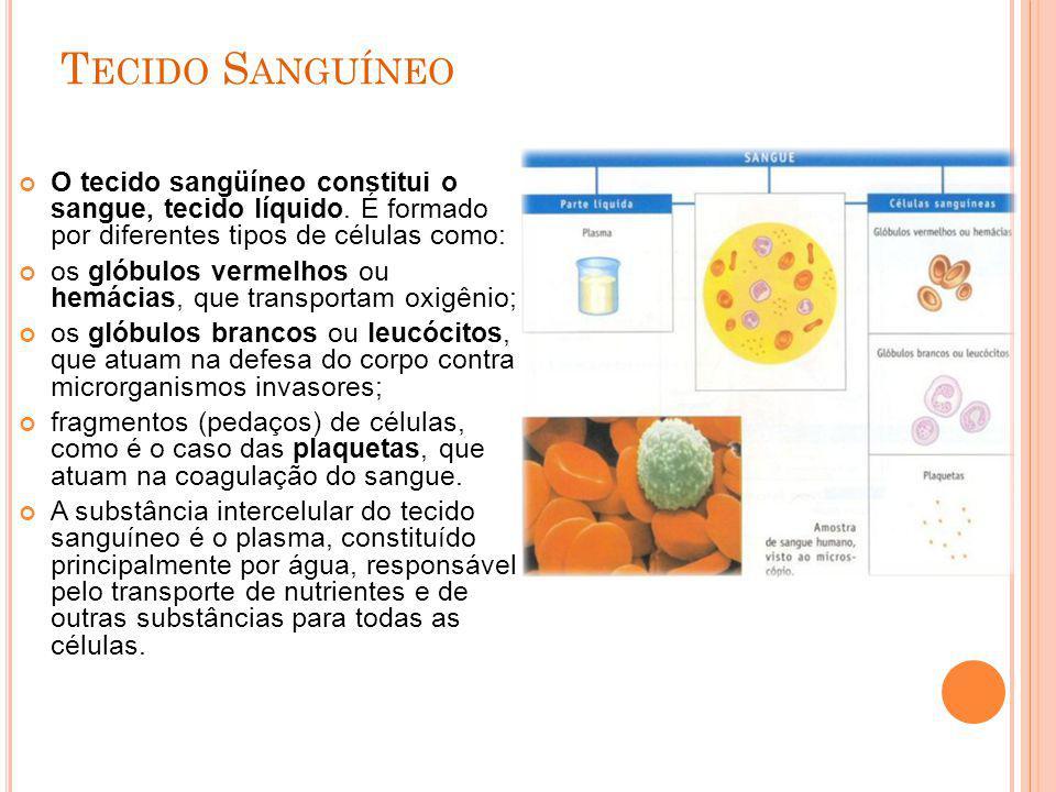 T ECIDO S ANGUÍNEO O tecido sangüíneo constitui o sangue, tecido líquido. É formado por diferentes tipos de células como: os glóbulos vermelhos ou hem
