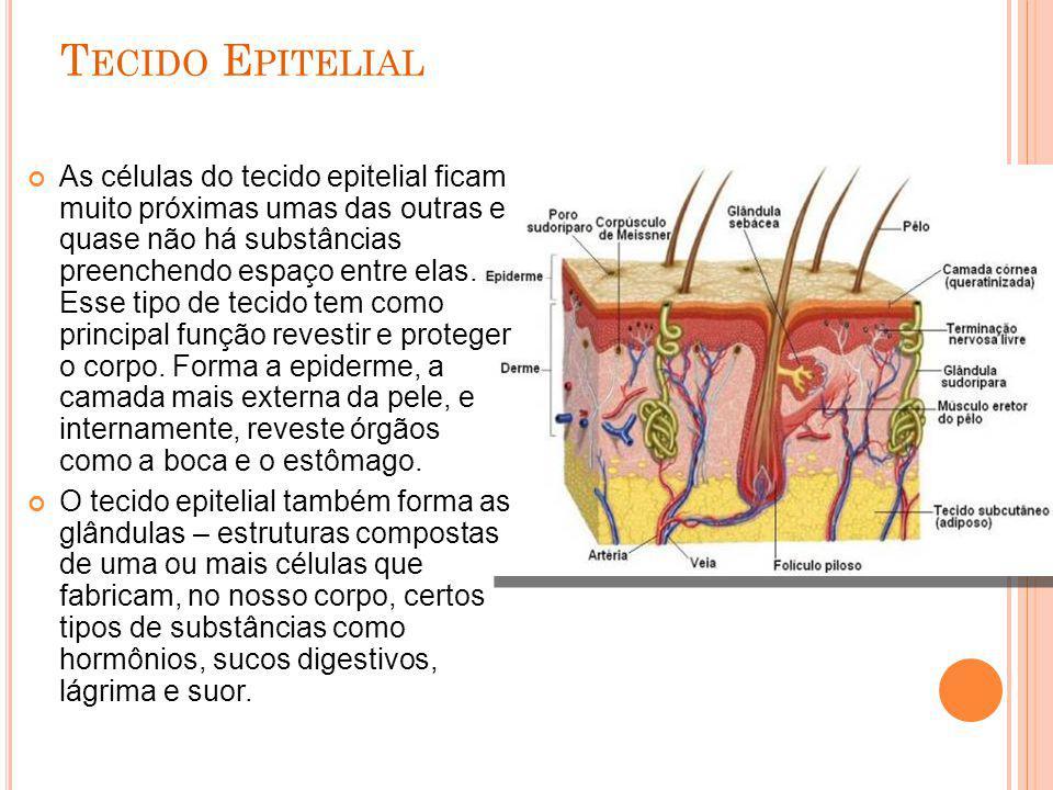 T ECIDO E PITELIAL As células do tecido epitelial ficam muito próximas umas das outras e quase não há substâncias preenchendo espaço entre elas. Esse