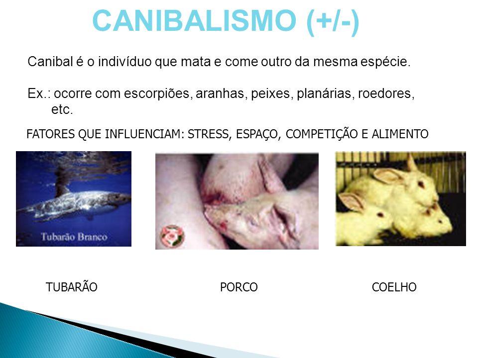 CANIBALISMO (+/-) Canibal é o indivíduo que mata e come outro da mesma espécie. Ex.: ocorre com escorpiões, aranhas, peixes, planárias, roedores, etc.