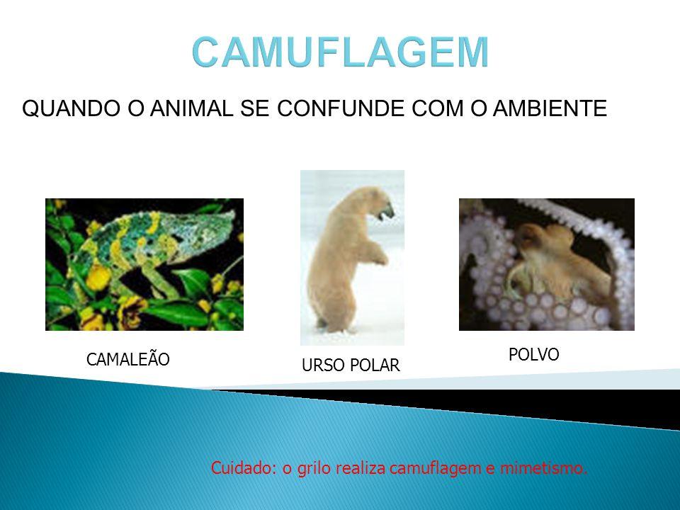 QUANDO O ANIMAL SE CONFUNDE COM O AMBIENTE CAMALEÃO URSO POLAR POLVO Cuidado: o grilo realiza camuflagem e mimetismo. POLVO
