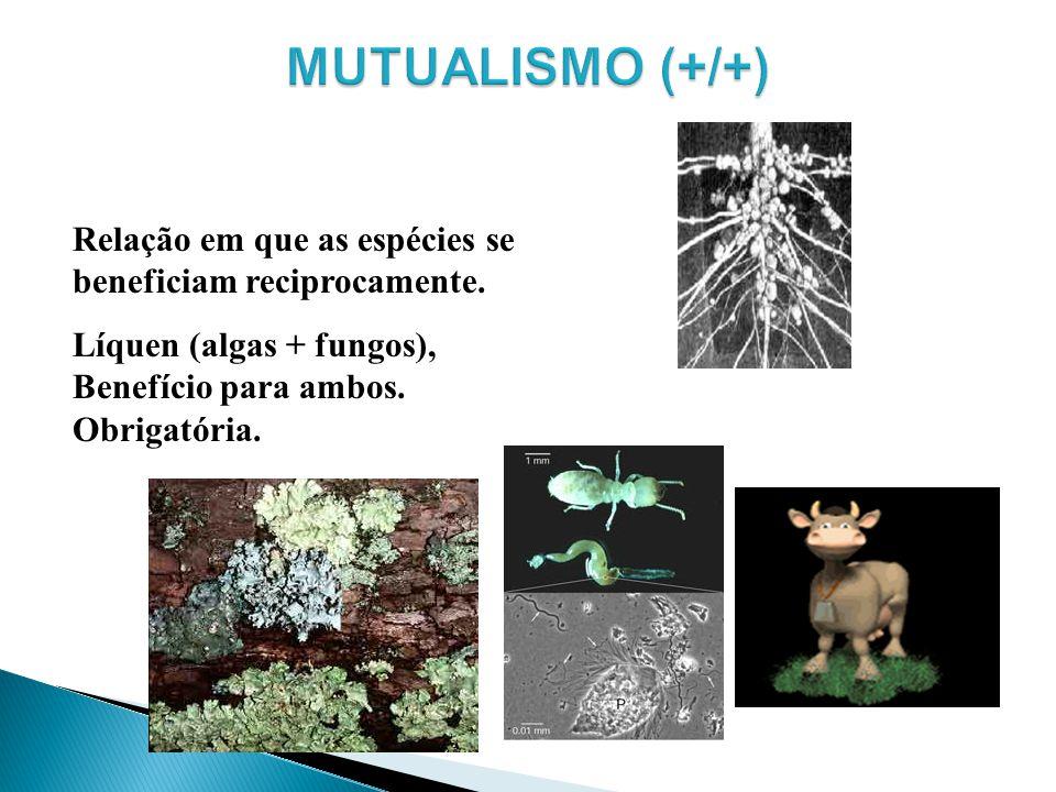 Relação em que as espécies se beneficiam reciprocamente. Líquen (algas + fungos), Benefício para ambos. Obrigatória.
