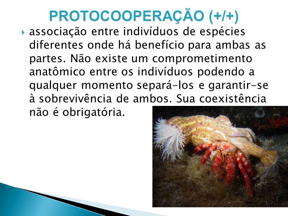 associação entre indivíduos de espécies diferentes onde há benefício para ambas as partes.