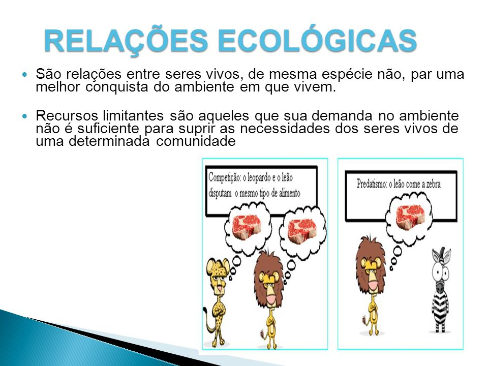 RELAÇÕES ECOLÓGICAS São relações entre seres vivos, de mesma espécie não, par uma melhor conquista do ambiente em que vivem.