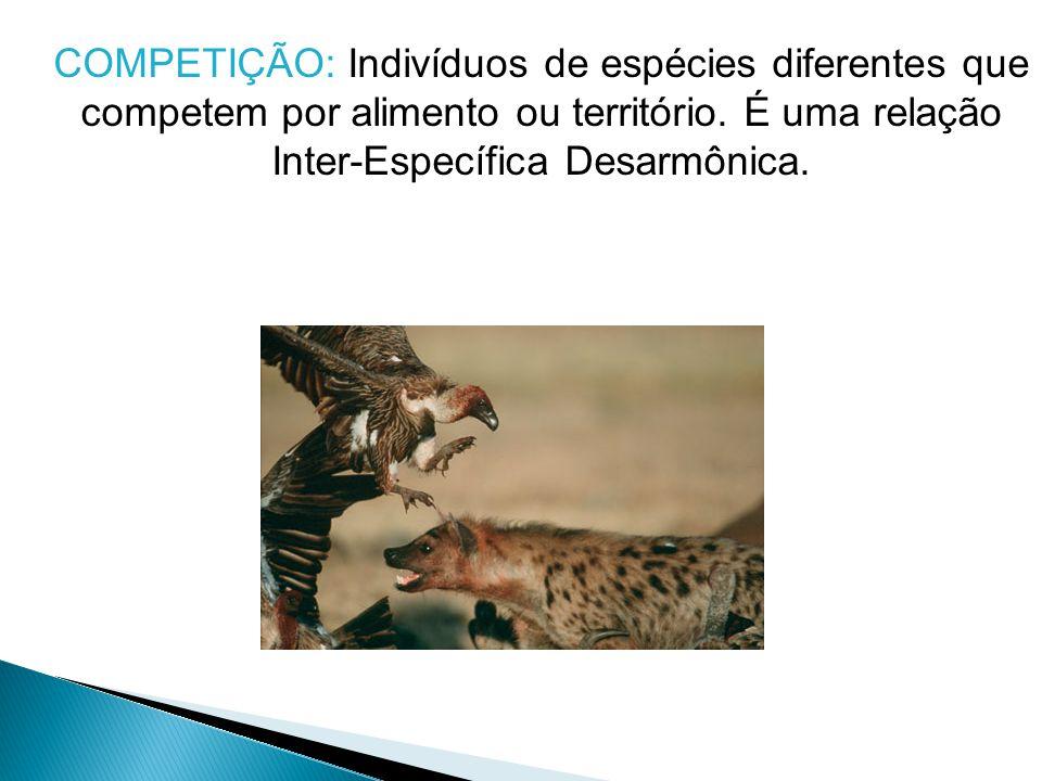 COMPETIÇÃO: Indivíduos de espécies diferentes que competem por alimento ou território. É uma relação Inter-Específica Desarmônica.