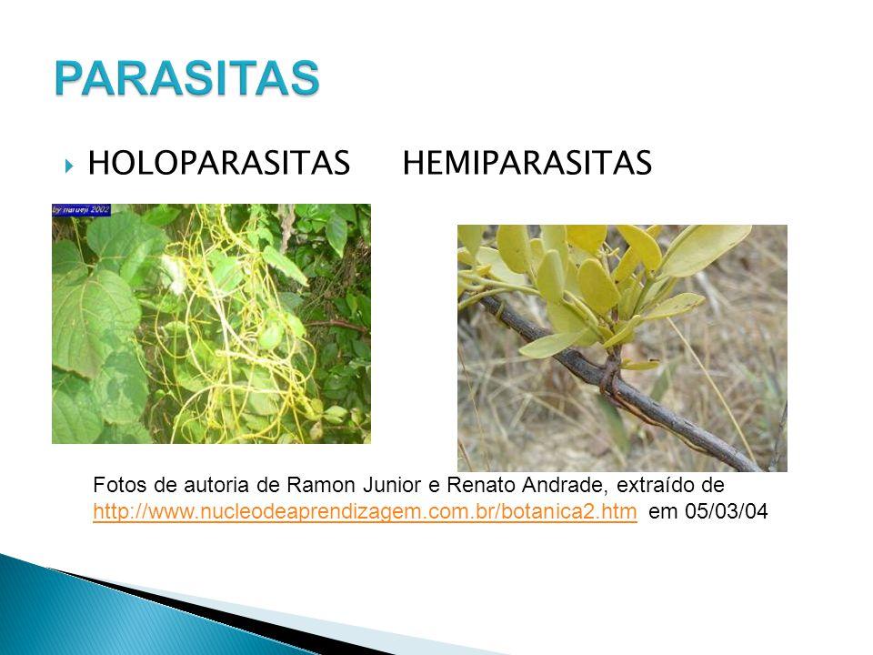 HOLOPARASITASHEMIPARASITAS Fotos de autoria de Ramon Junior e Renato Andrade, extraído de http://www.nucleodeaprendizagem.com.br/botanica2.htmhttp://w