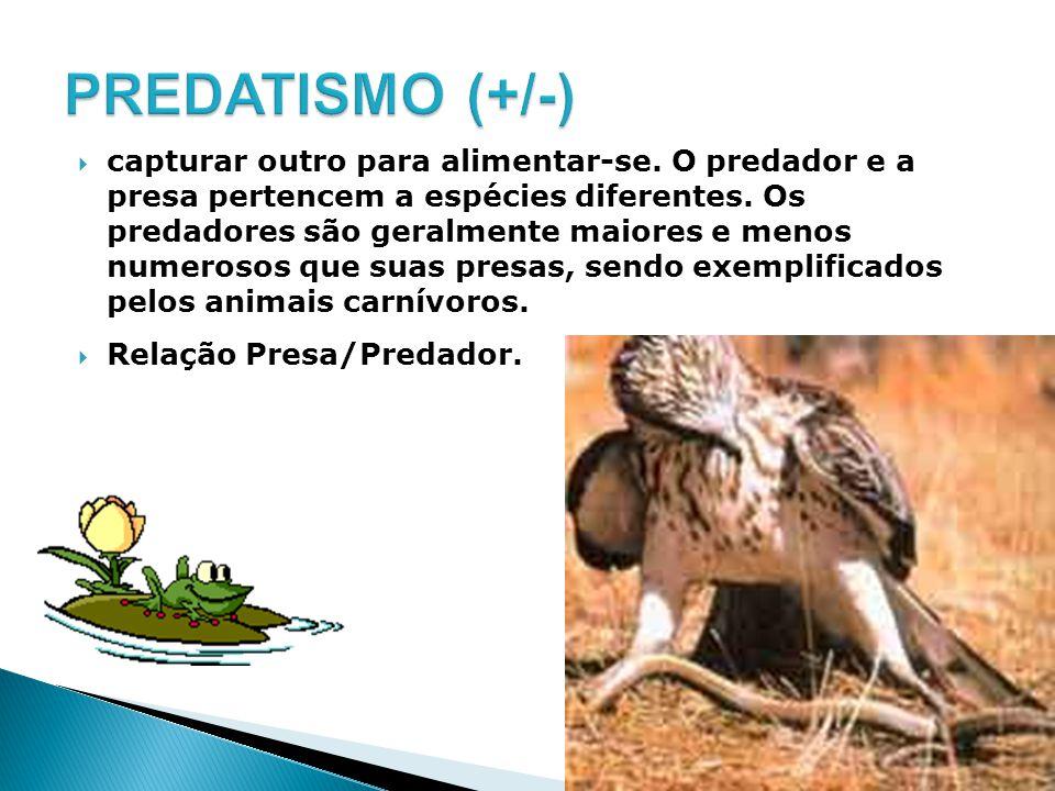 capturar outro para alimentar-se. O predador e a presa pertencem a espécies diferentes. Os predadores são geralmente maiores e menos numerosos que sua