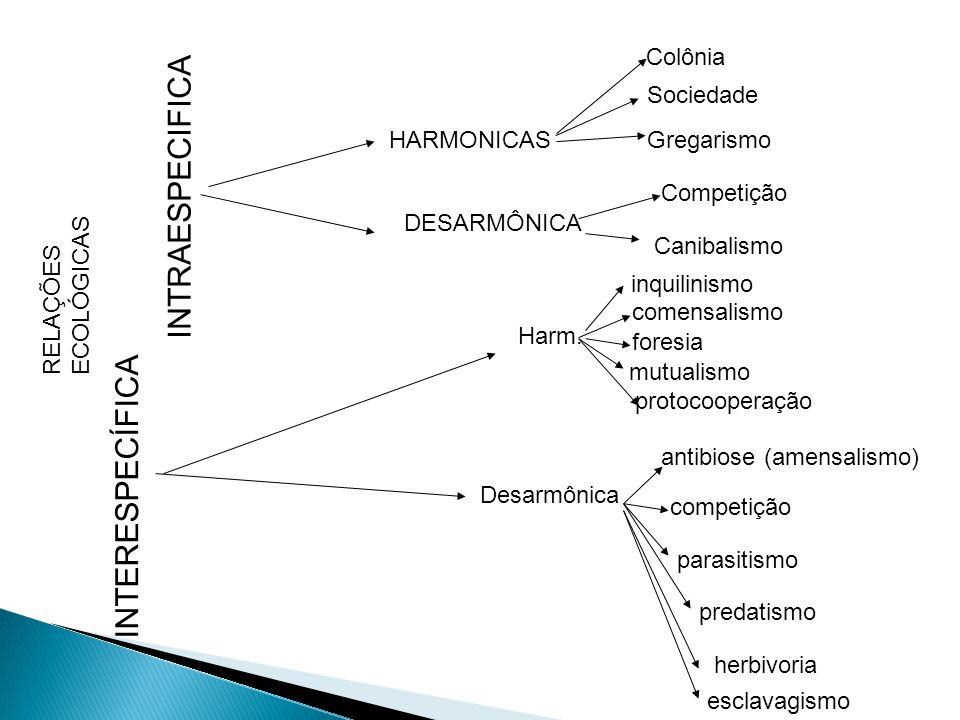 HARMONICAS Colônia Sociedade DESARMÔNICA Competição Canibalismo Harm. inquilinismo comensalismo mutualismo protocooperação Desarmônica antibiose (amen