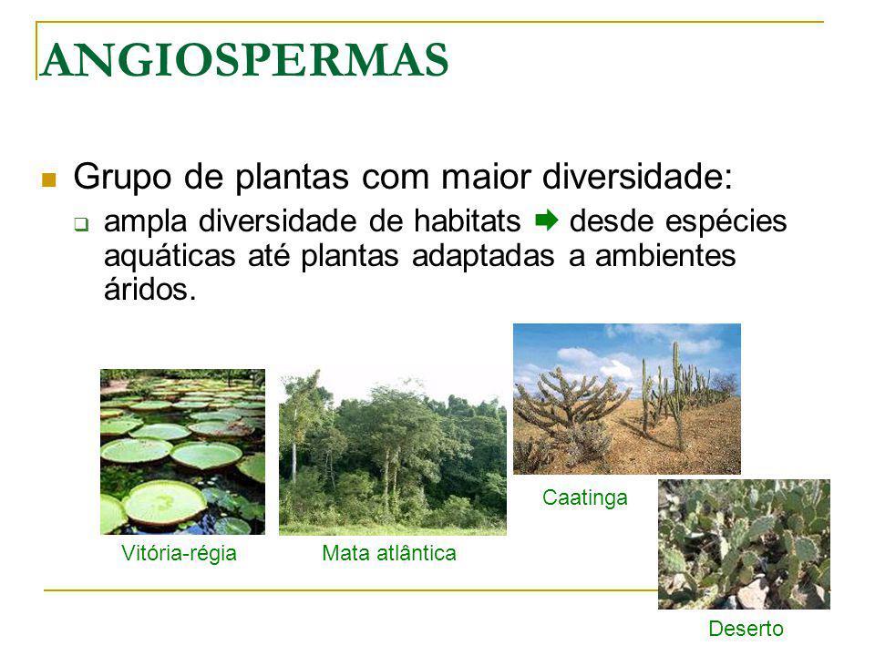 ANGIOSPERMAS Grupo de plantas com maior diversidade: ampla diversidade de habitats desde espécies aquáticas até plantas adaptadas a ambientes áridos.