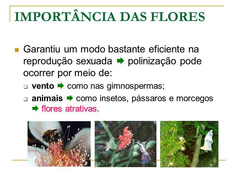 IMPORTÂNCIA DAS FLORES Garantiu um modo bastante eficiente na reprodução sexuada polinização pode ocorrer por meio de: vento como nas gimnospermas; flores atrativas animais como insetos, pássaros e morcegos flores atrativas.