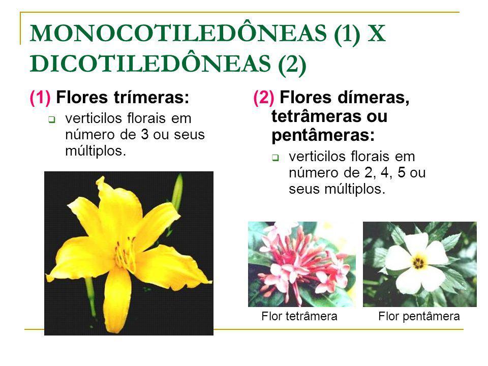 MONOCOTILEDÔNEAS (1) X DICOTILEDÔNEAS (2) (1) Flores trímeras: verticilos florais em número de 3 ou seus múltiplos.