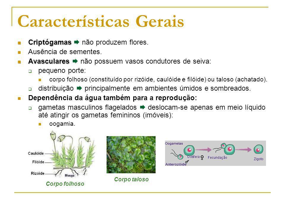 Características Gerais Criptógamas Criptógamas não produzem flores.