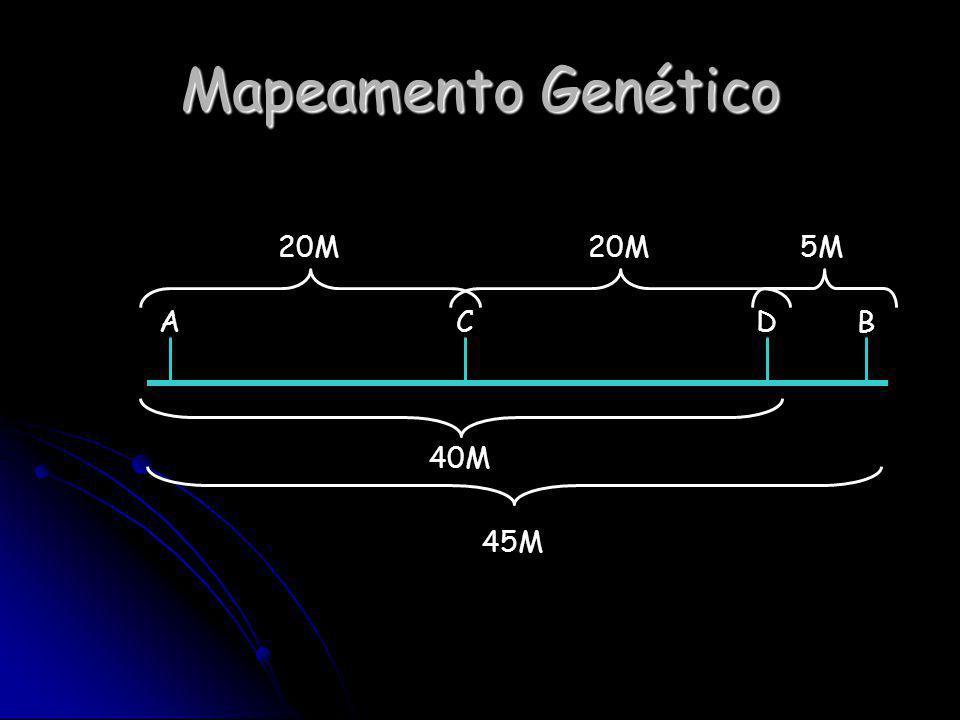 Mapeamento Genético ACDB 45M 40M 20M 5M