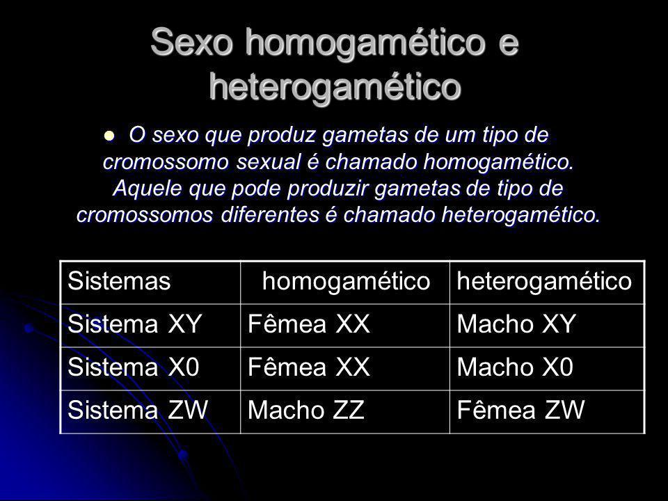 Sexo homogamético e heterogamético O sexo que produz gametas de um tipo de cromossomo sexual é chamado homogamético. Aquele que pode produzir gametas