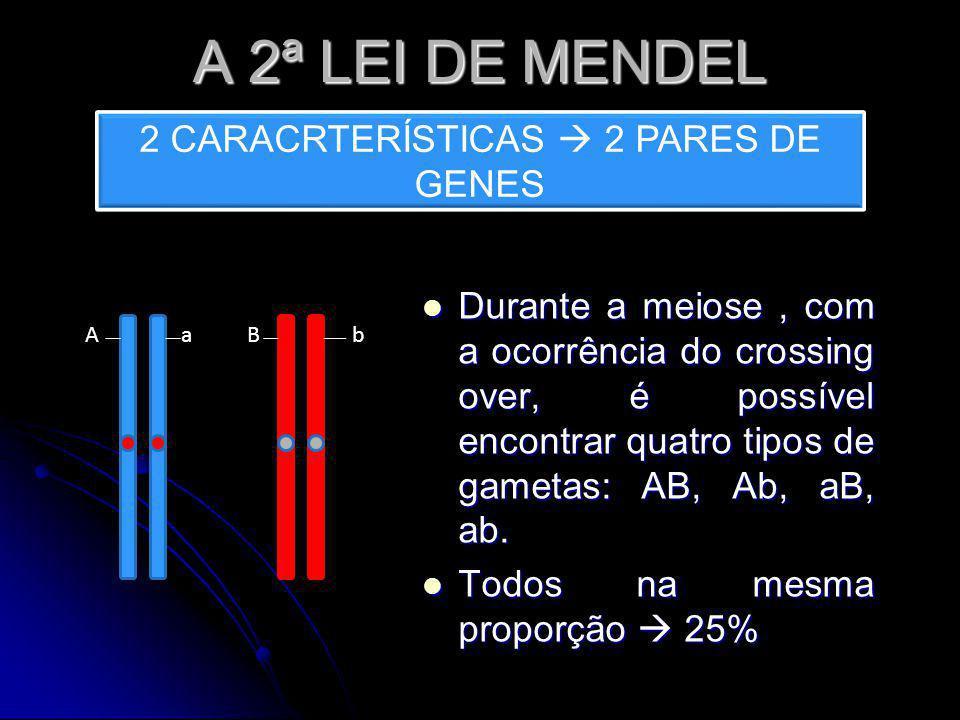 A 2ª LEI DE MENDEL Durante a meiose, com a ocorrência do crossing over, é possível encontrar quatro tipos de gametas: AB, Ab, aB, ab. Durante a meiose