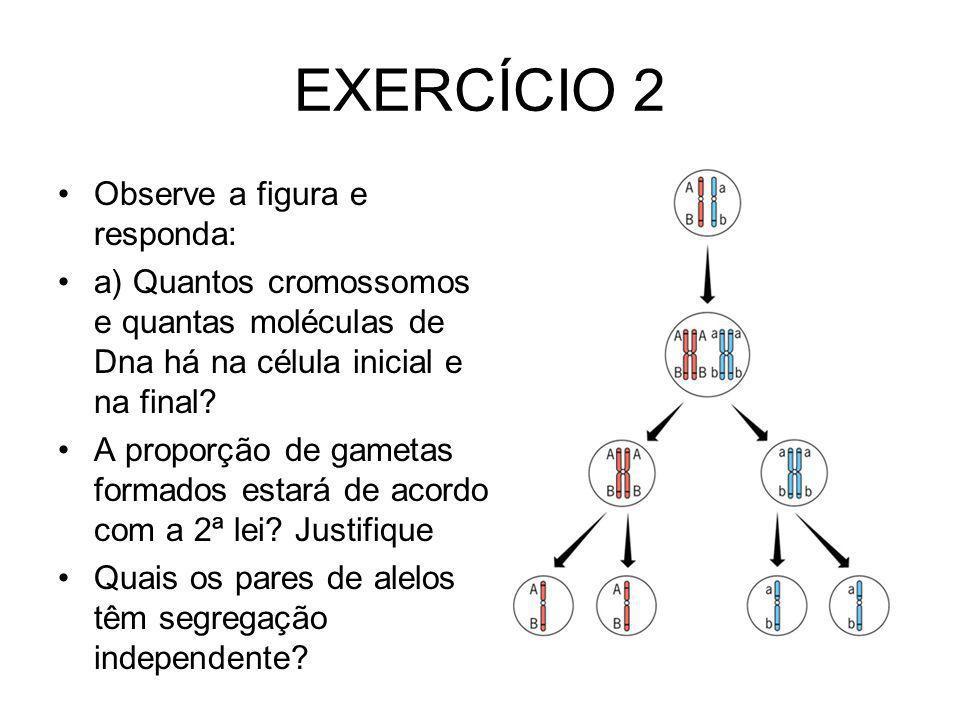 EXERCÍCIO 2 Observe a figura e responda: a) Quantos cromossomos e quantas moléculas de Dna há na célula inicial e na final? A proporção de gametas for